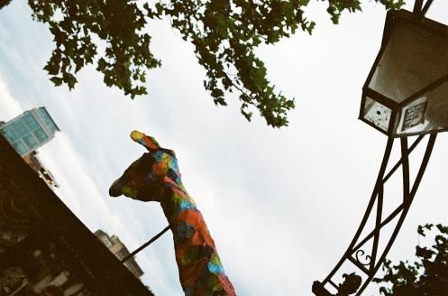 Lantern Parade Ian-8