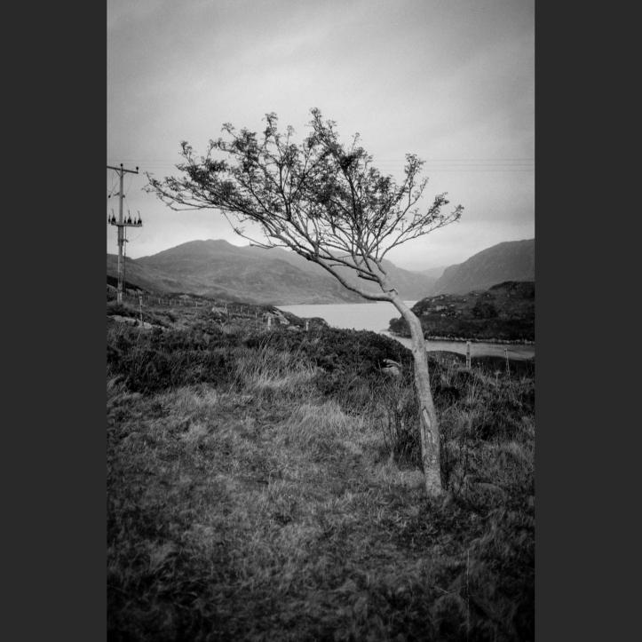 Leica FP4 7 229