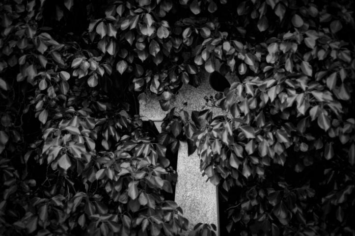 EOS5 Kodak 2238 069